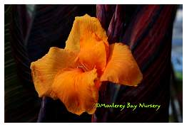 molten orange flowers