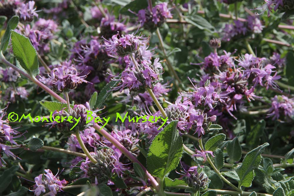 purple flowers, closeup
