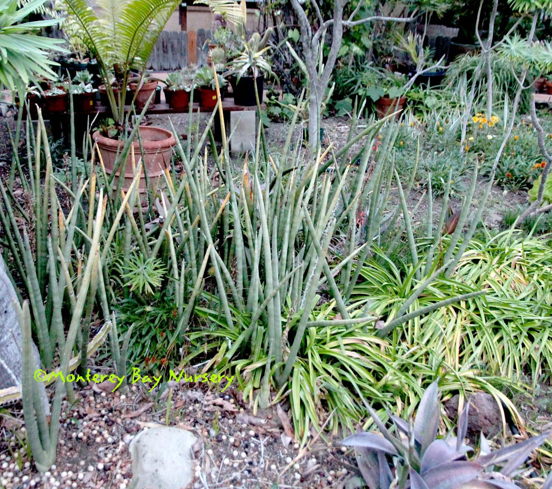 Karl's garden, Camarillo